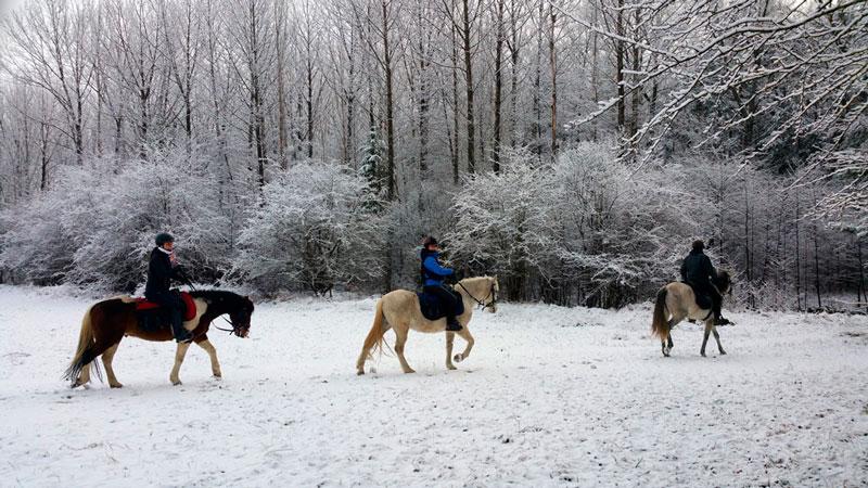 paseos a caballo invierno jaca pirineo ecuestre