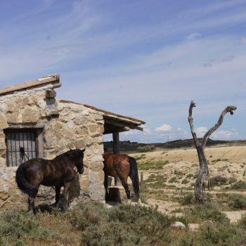 rutas a caballo desierto bardenas