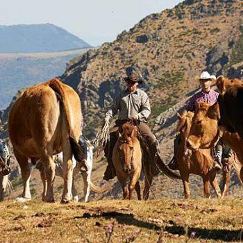 transhumancia a caballo turismo