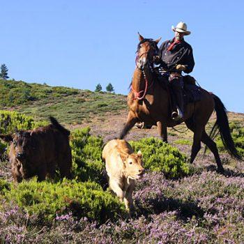 ruta transhumancia a caballo