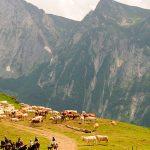 ruta a caballo por el parque nacional de los Pirineos