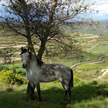 ruta a caballo en el alto aragon