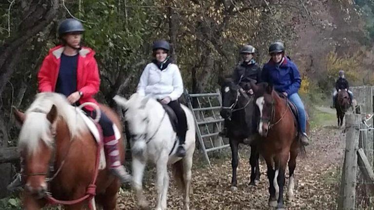 caballos-en-el-pirineo-jaca