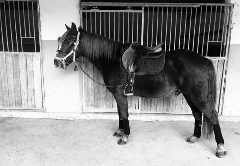 caballos-hipica-jaca-pirineos