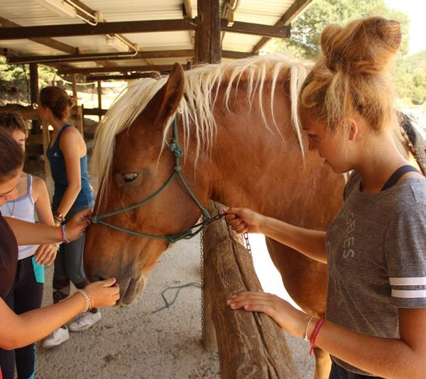 campamentos de equitacion en navidad