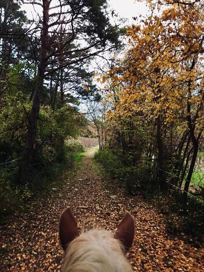 paseos-a-caballo-otoño-pirineo