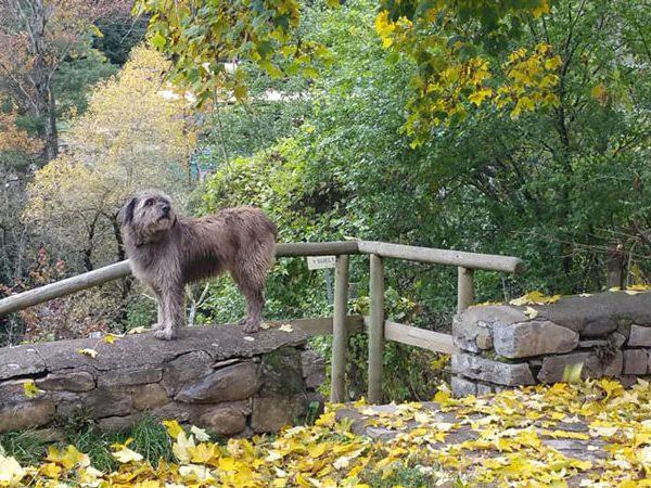 pirineo ecuestre otoño jaca