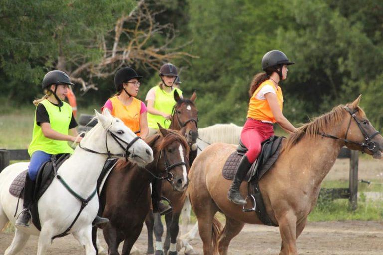 caballos en el pirineo