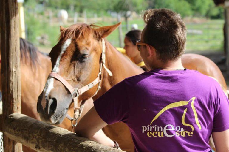 campamentos de equitacion y caballos